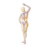 """""""Massaggio Linfatico Manuale – Base"""": apprendere il massaggio drenante per eccellenza"""
